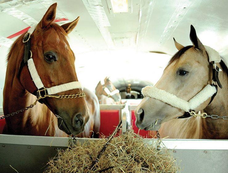 Transporting Horses