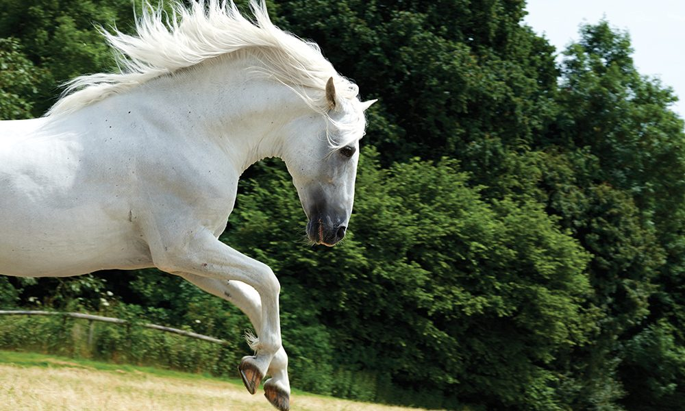 White Horse at the Waterfall by Carol Walker (Color Photograph ... | 600x1000