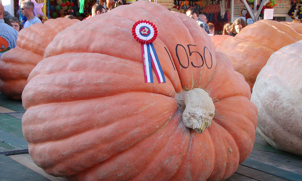 Giant Pumpkin Fest