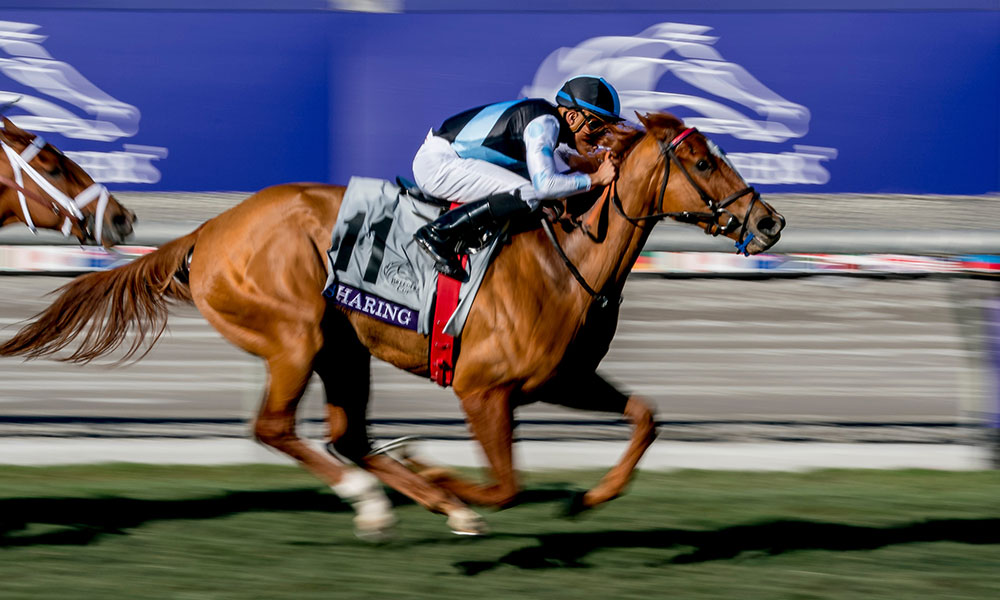 Daily Racing Form 2019 Breeders Cup Post Race Analysis